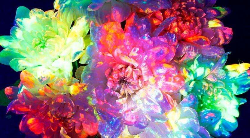 Продажа светящихся цветов